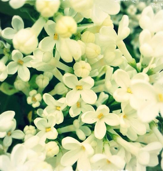 floralfriday 052.jpg