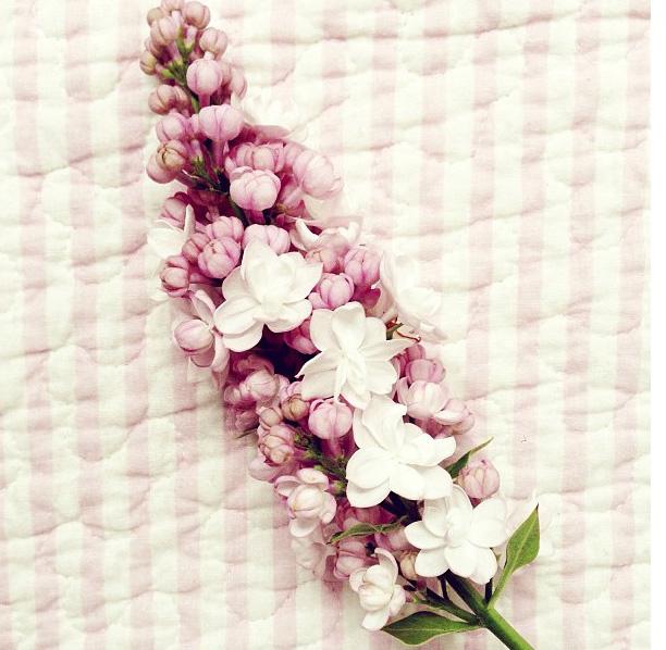 floralfriday 064.jpg