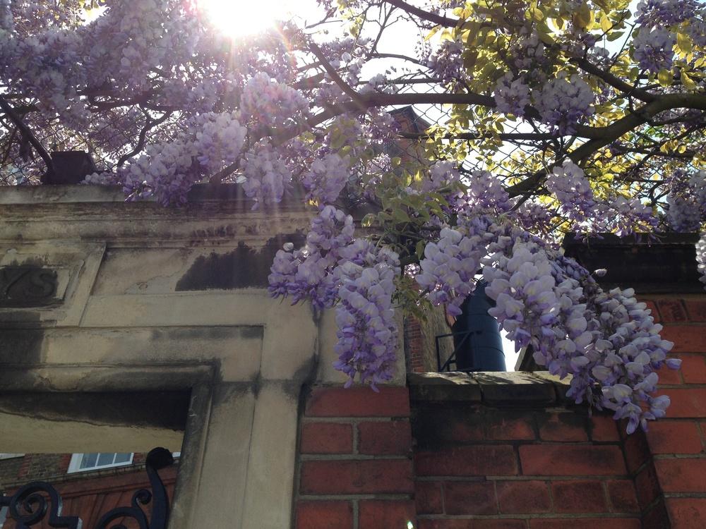 floralfriday 066 (1).jpg