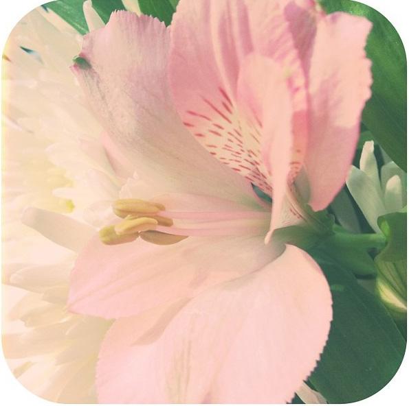 floralfriday 061 (1).jpg