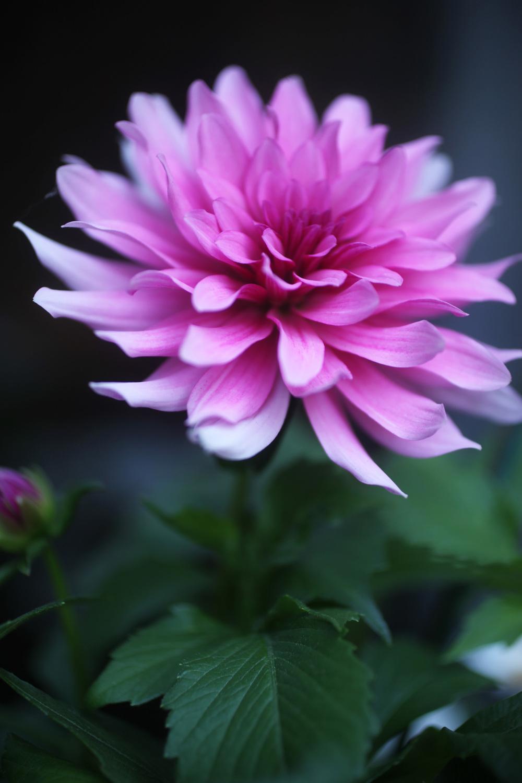 garden01.jpg