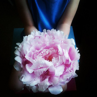 floraljune 005.jpg