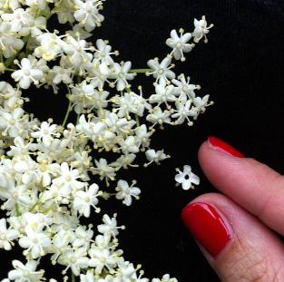 floraljune 011.jpg
