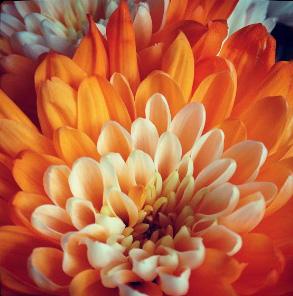 floraljune 013.jpg