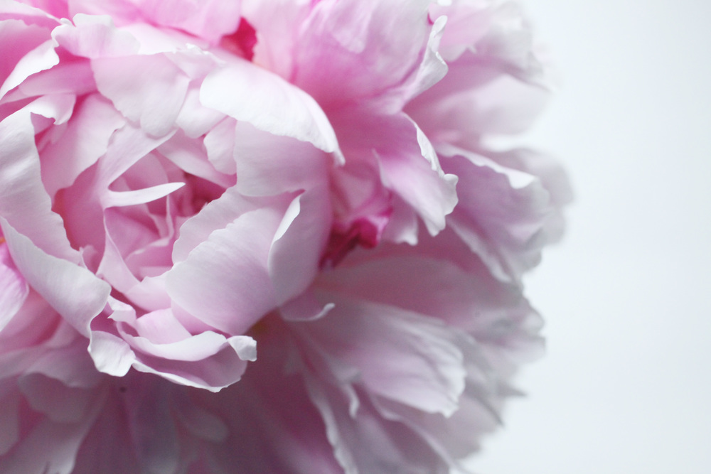floraljune 024.jpg