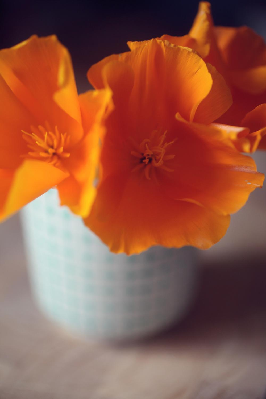 poppies 006.jpg