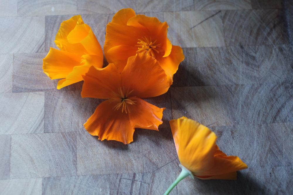 poppies 011.jpg