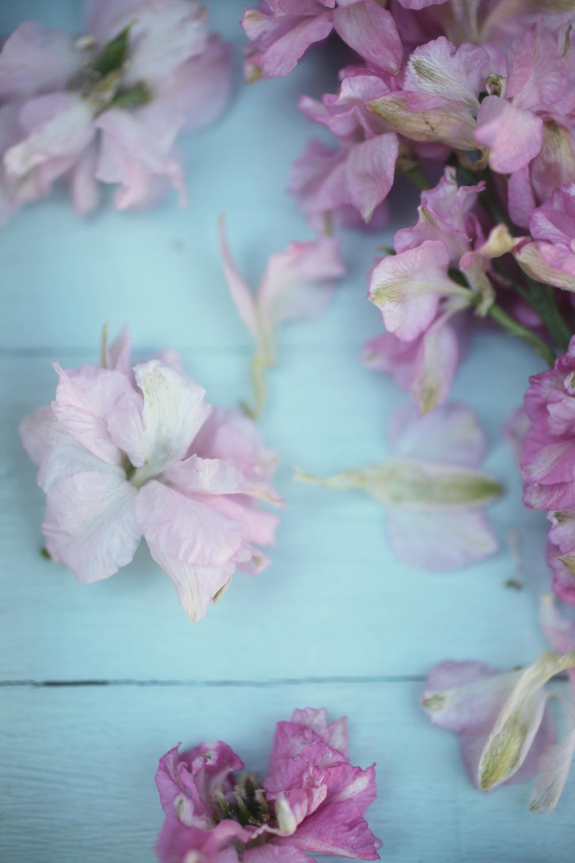julyflorals 014.jpg