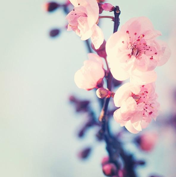 floralfriday2607 005.jpg