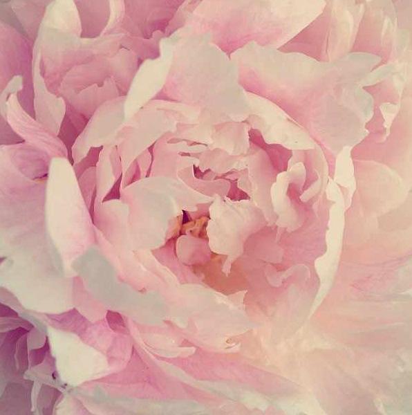 floralfridayaugust 011.jpg