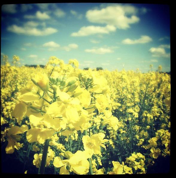 floralfridayaugust 013.jpg