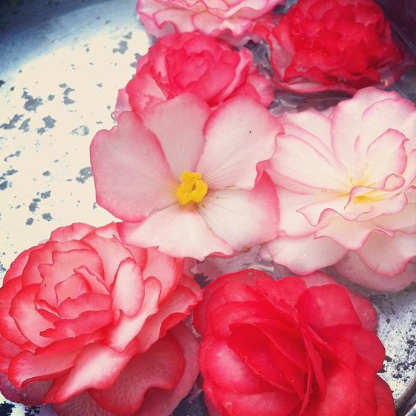 floralfridayaugust 030.jpg