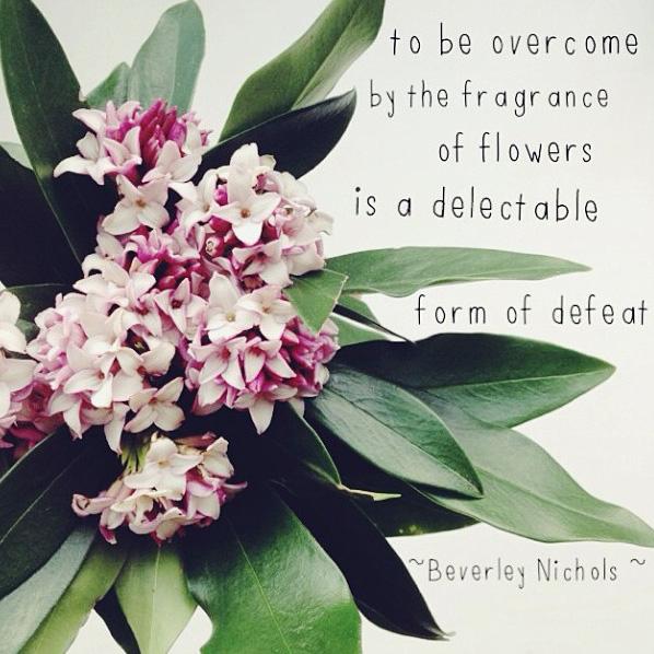 floralfridayaugust 035.jpg