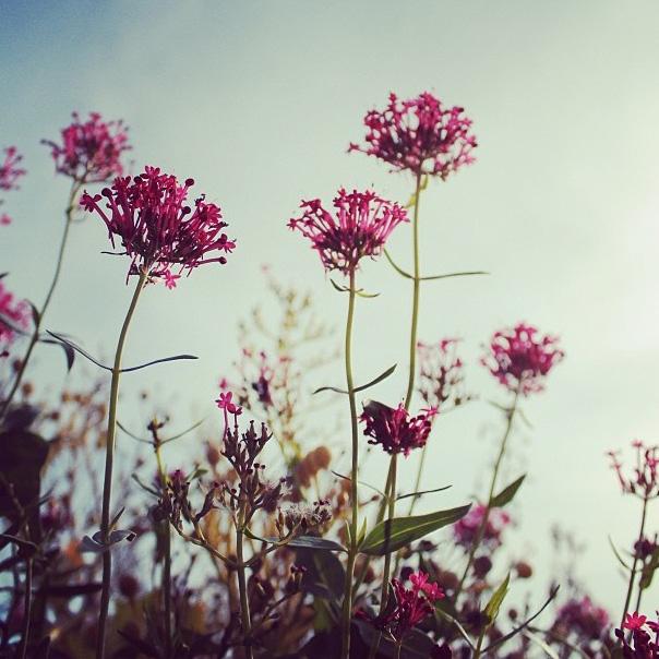 floralfridayaugust 040.jpg