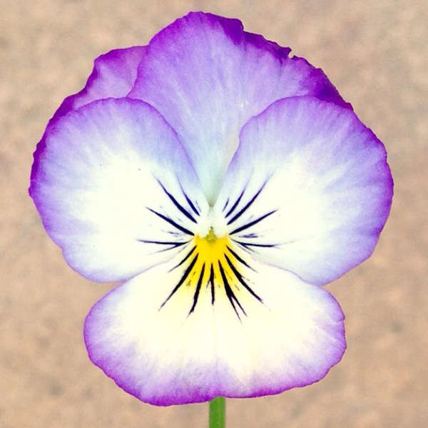 floralfridayseptember 007.jpg