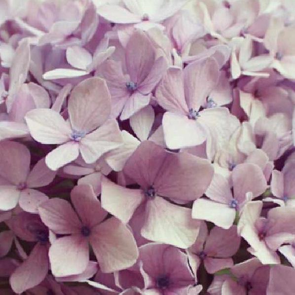 floralfridayseptember 024.jpg