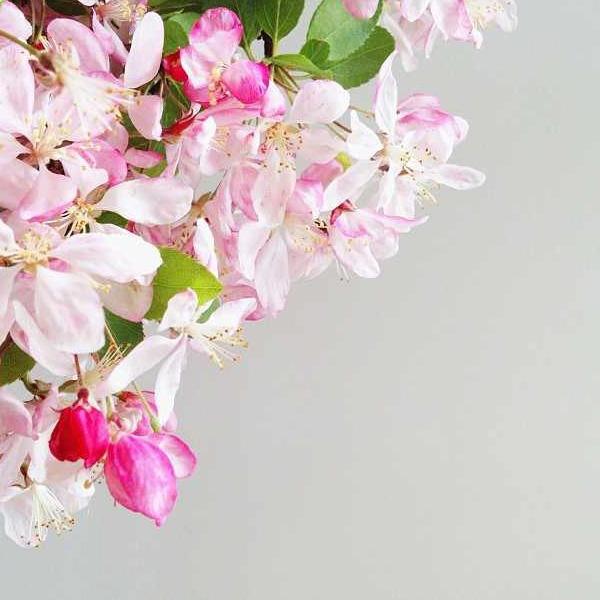 floralfridayseptember 023.jpg