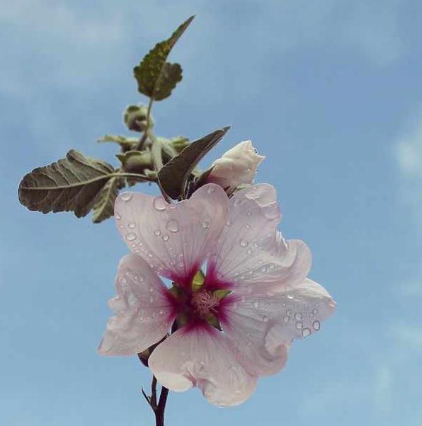 floralfridayseptember 021.jpg