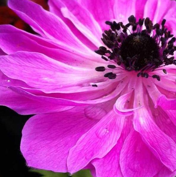 floralfridayseptember 019.jpg