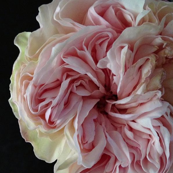 floralfridayOctober 012.jpg