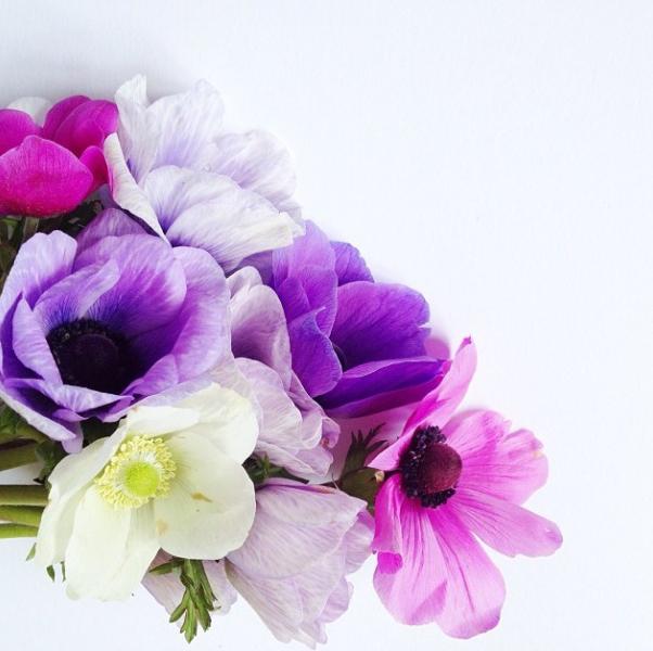 FloralFriday1013 009.jpg