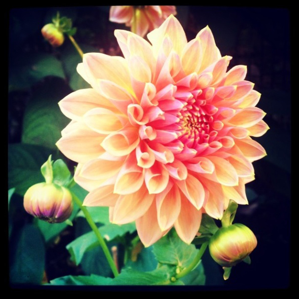 FloralFriday1013 001.jpg