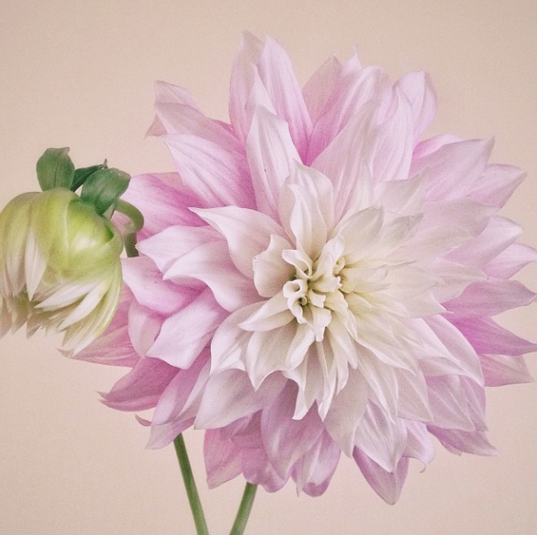FloralFriday1013 004.jpg