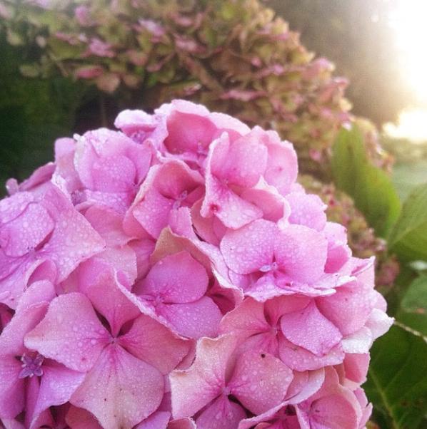 FloralFriday1013 005.jpg