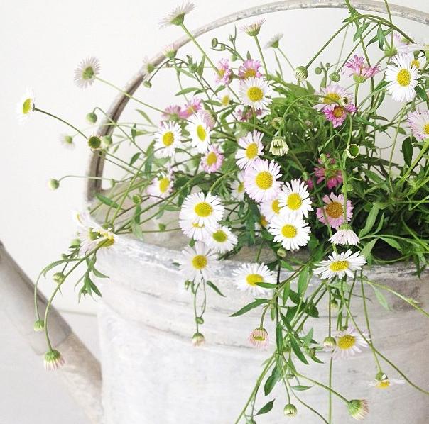 FloralFriday1013 007.jpg