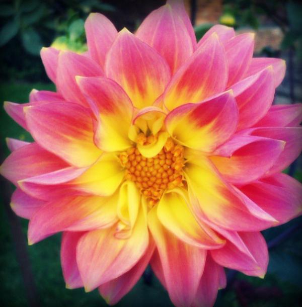 FloralFridayNovember 006.jpg