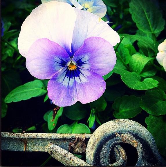 FloralFridayNovember 010.jpg