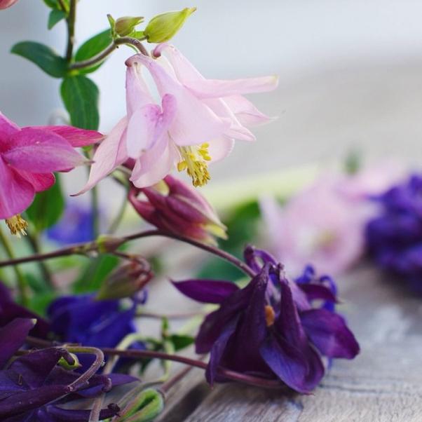 FloralFridayNovember 018.jpg