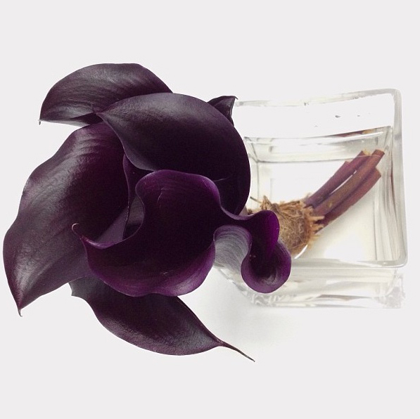 FloralFriday 023.jpg