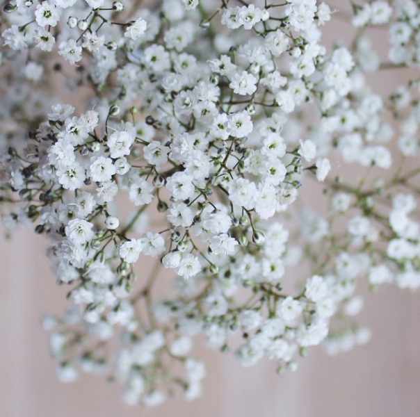 FloralFriday 021.jpg