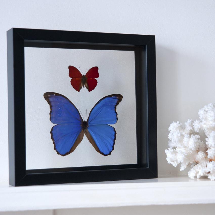 framedbutterflies.jpg
