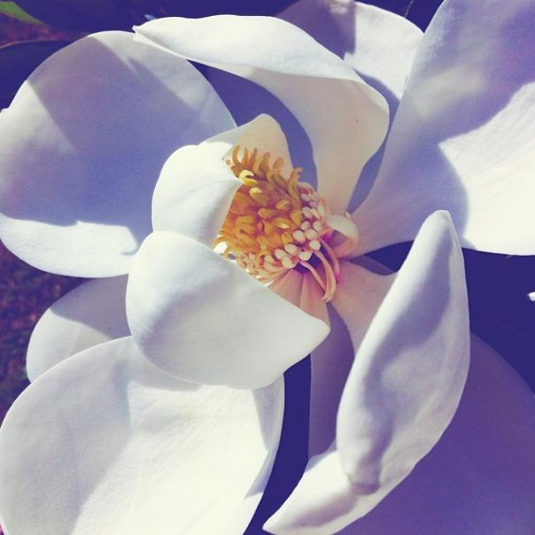 floralfridaynovember 032.jpg