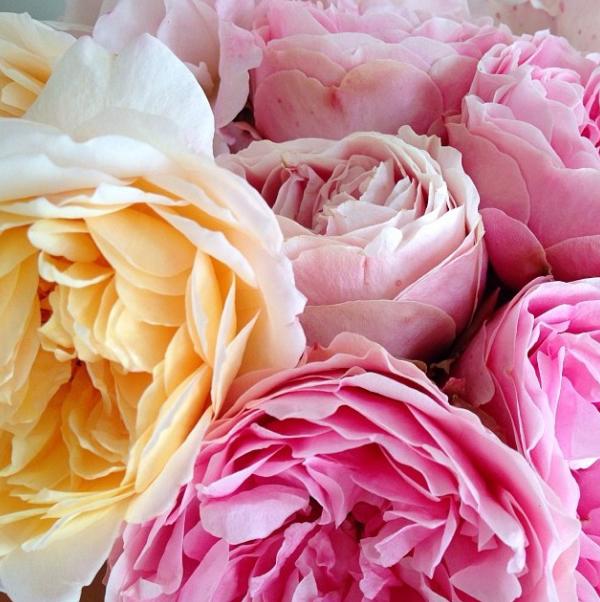 FloralFridayDecember 005.jpg