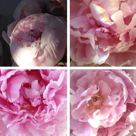 FloralFridayDecember 003.jpg