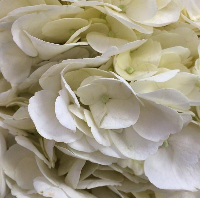 FloralDecember 002.jpg