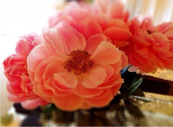 FloralDecember 006.jpg
