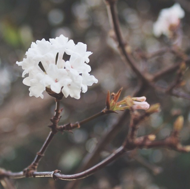 FloralDecember 009.jpg