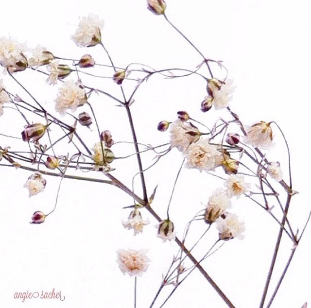 FloralDecember 025.jpg