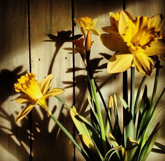 floraljan 035.jpg
