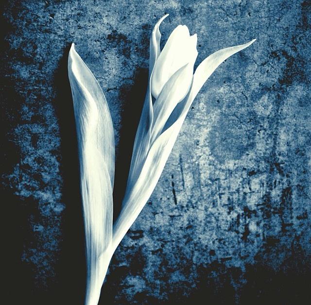 floraljan 046.jpg