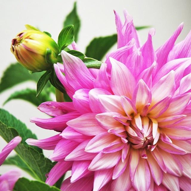 floraljan 050.jpg