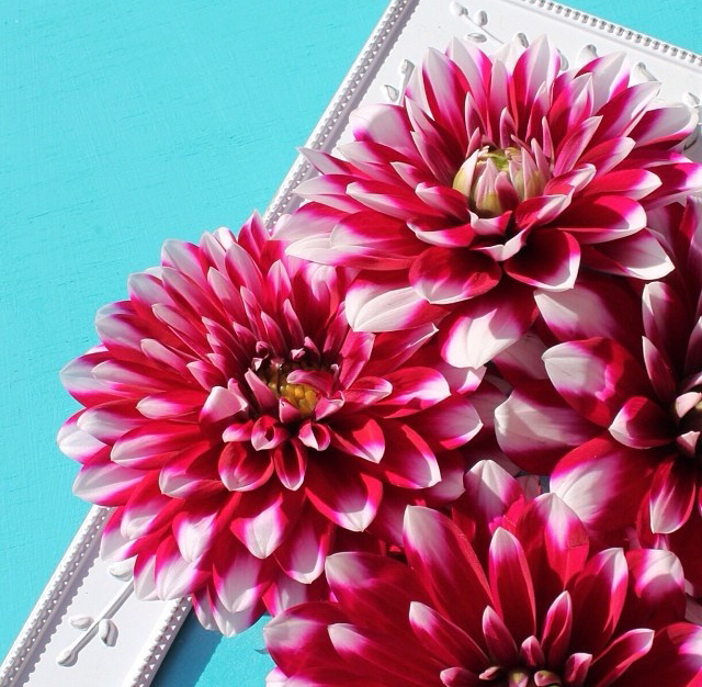 floraljan 053.jpg