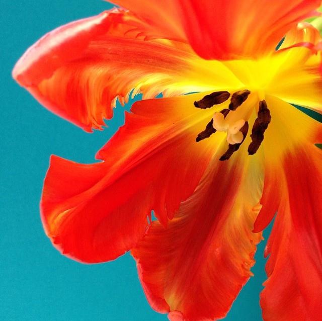 floraljan 85.jpg