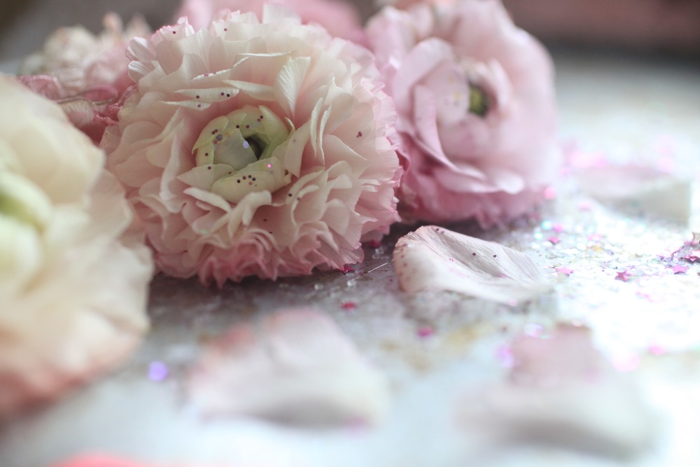 pink ranunculus  014.jpg
