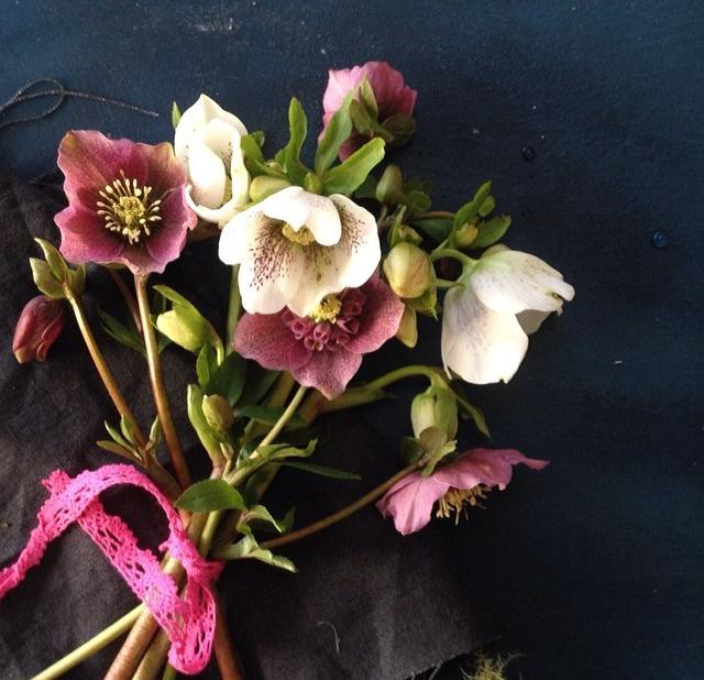 FloralFeb 4.jpg