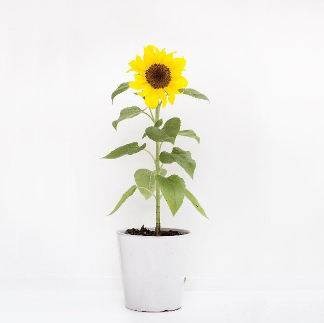 FloralFeb 37.jpg